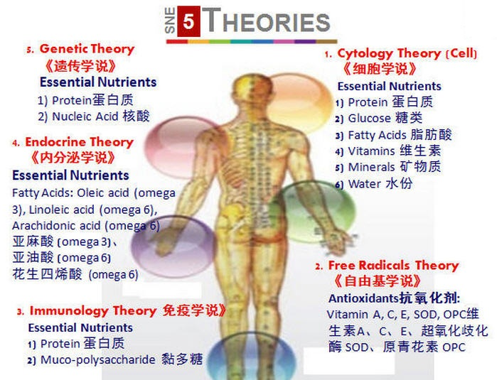 two theories of ageing The continuity theory of aging relates that personality, values, morals, preferences, role activity, and basic patterns of behavior are consistent throughout the life span, regardless of the life changes one encounters this theory builds upon and modifies the activity theory unlike the other two sociological.
